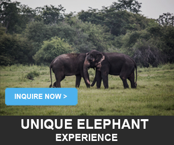 Elephant Experience LankaTourExperience
