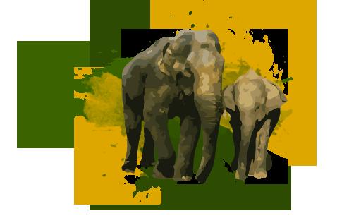wild Elefantes LankaTourExperience