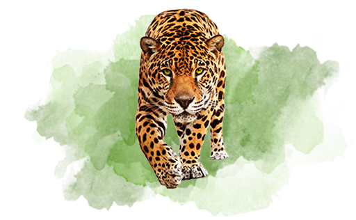 Majestic Wildlife-lankatourexperience