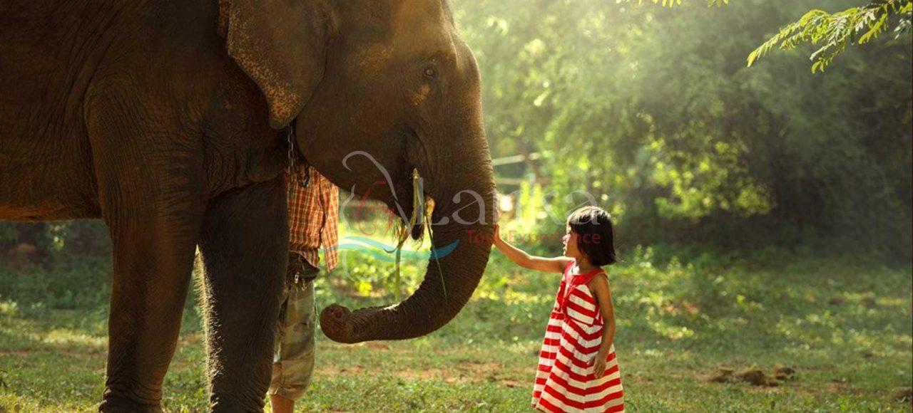 Family Safari Tour Of Sri Lanka – 10 Days