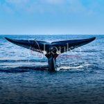 A tale of a whale, Mirissa