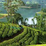Tea plantations around the castlereagh reservoir Hatton Sri lanka