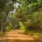 Dirt Road at Willpaththu National Park, Sri Lanka