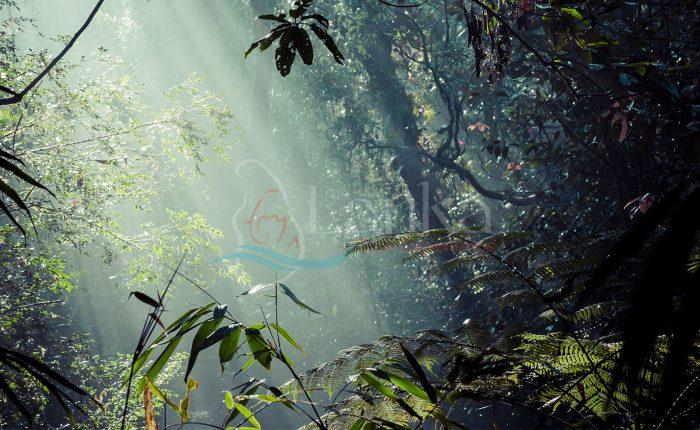 Sinharaya Rain Forest