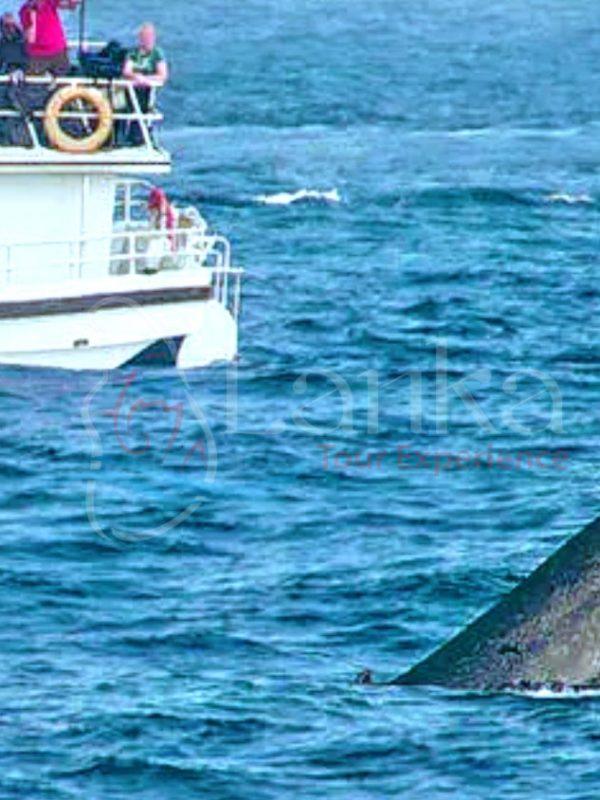 Mirissa Whale Watching 2D 1N