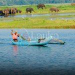 Local tank fisherman fishing on reservoir in Minneriya National Park