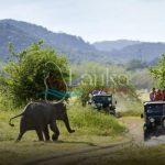 Tourist make game drive in Minneriya national park